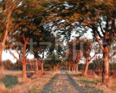 Bäume stehen als Allee an einem Feldweg. Die rote Morgensonne sorgt für ein schönes Ambiente. Die leichte Drehung der Kamera beim Abdrücken zaubert einen Dreheffekt im Bild.