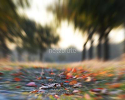 Herbstlaub makro